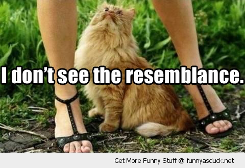 dont see resemblance cat looking up skirt pussy animal funny pics pictures pic picture image photo images photos lol