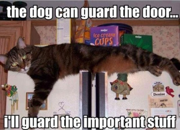cat on fridge animal lolcat guard door important stuff funny pics pictures pic picture image photo images photos lol