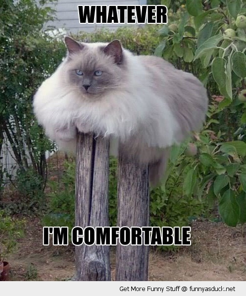 cat sitting post wood what comfortable animal fat whatever lolcat funny pics pictures pic picture image photo images photos lol