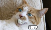 sup cat lolcat animal human people teeth funny pics pictures pic picture image photo images photos lol