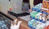 cat in store shop buying catnip lolcat animal funny pics pictures pic picture image photo images photos lol