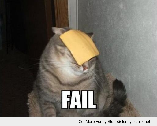 cheese slice cats face animal fail funny pics pictures pic picture image photo images photos lol