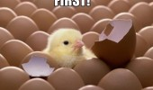 first chick born hatched egg animal chicken cute baby funny pics pictures pic picture image photo images photos lol