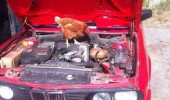 chicken animal mechanic yup your problem bird car fixing funny pics pictures pic picture image photo images photos lol