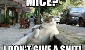 cool chilled cat animal mice don't give shit sidewalk pavement funny pics pictures pic picture image photo images photos lol