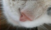 cat lolcat close up nose animal feed me funny pics pictures pic picture image photo images photos lol