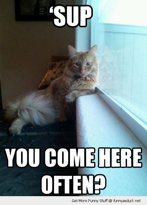 come here often cat lolcat window animal sup funny pics pictures pic picture image photo images photos lol