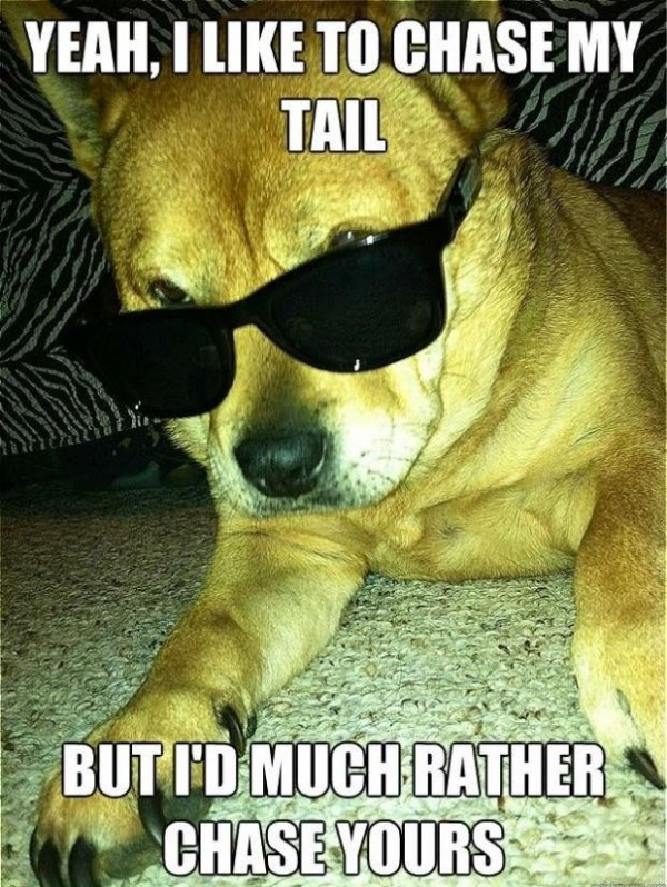 cool dog shades sunglasses chase tail animal funny pics pictures pic picture image photo images photos lol