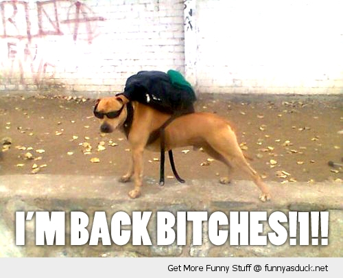 im back bitches cool dog backpack animal sunglasses shades funny pics pictures pic picture image photo images photos lol