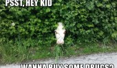 cow head through hedge bush kid animal buy drugs creepy funny pics pictures pic picture image photo images photos lol
