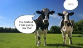 moo gonna say that cows talking field animal funny pics pictures pic picture image photo images photos lol