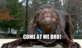 crazy mad dumb angry dog animal come at me bro face funny pics pictures pic picture image photo images photos lol