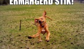 ermahgerd stick crazy mad dog running chasing stik field funny pics pictures pic picture image photo images photos lol