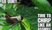 so quiet chirp asshole cricket insect leaf animal funny pics pictures pic picture image photo images photos lol