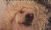 cross dressing dog in wig animal can explain funny pics pictures pic picture image photo images photos lol