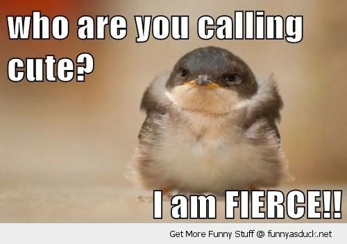 cute baby chick bird angry grumpy i am fierce animal funny pics pictures pic picture image photo images photos lol