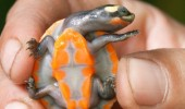 cute baby turtle hand animal fabulous orange funny pics pictures pic picture image photo images photos lol