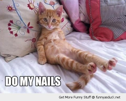 cute cat lolcat animal feet paws do my nails bed lying funny pics pictures pic picture image photo images photos lol