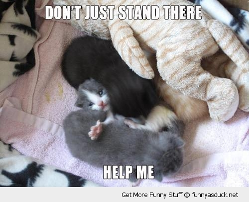 cute kitten animal help me stuck cat lolcat funny pics pictures pic picture image photo images photos lol