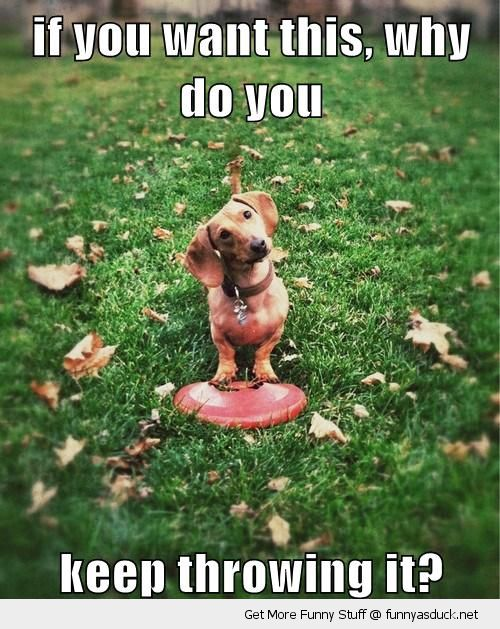 cute dog animal want it keep throwing away frisbee catch fetch funny pics pictures pic picture image photo images photos lol