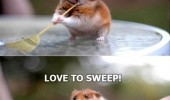 cute hamster sweeping love to brush animal face funny pics pictures pic picture image photo images photos lol