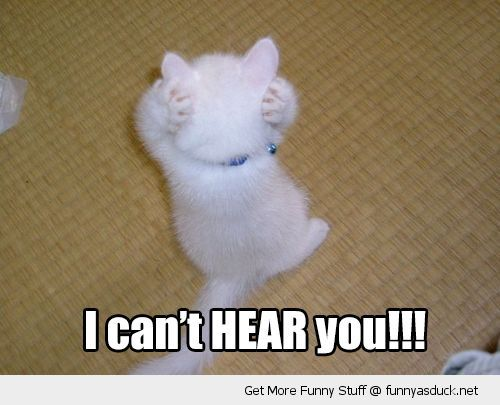 cant hear you cute cat kitten holding ears paws funny pics pictures pic picture image photo images photos lol