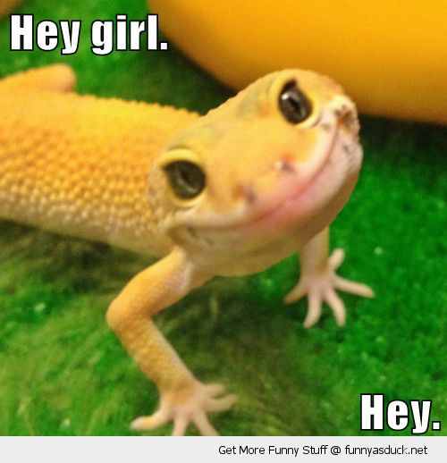 cute bearded dragon lizard smiling happy hey girl funny pics pictures pic picture image photo images photos lol