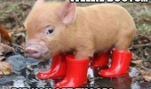 wellie boots wellington cute baby pig pun animal funny pics pictures pic picture image photo images photos lol