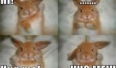 hug me cute rabbit bunny hello animal funny pics pictures pic picture image photo images photos lol