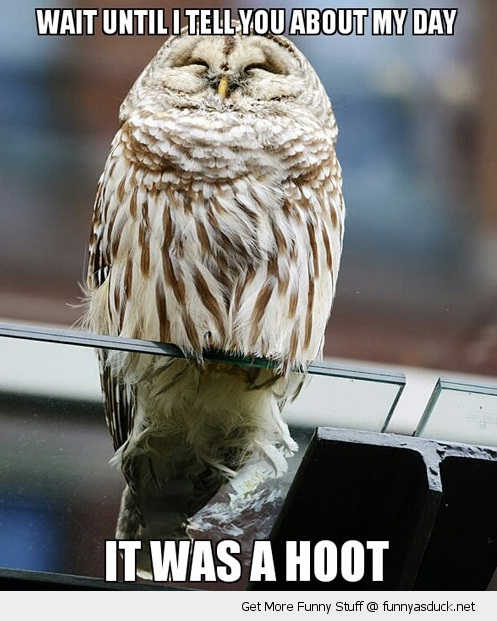 day has been a hoot owl bird pun happy animal funny pics pictures pic picture image photo images photos lol