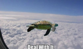 deal with it flying turtle air plane window animal funny pics pictures pic picture image photo images photos lol
