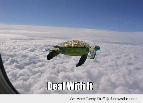 funny-deal-with-it-flying-turtle-air-pla