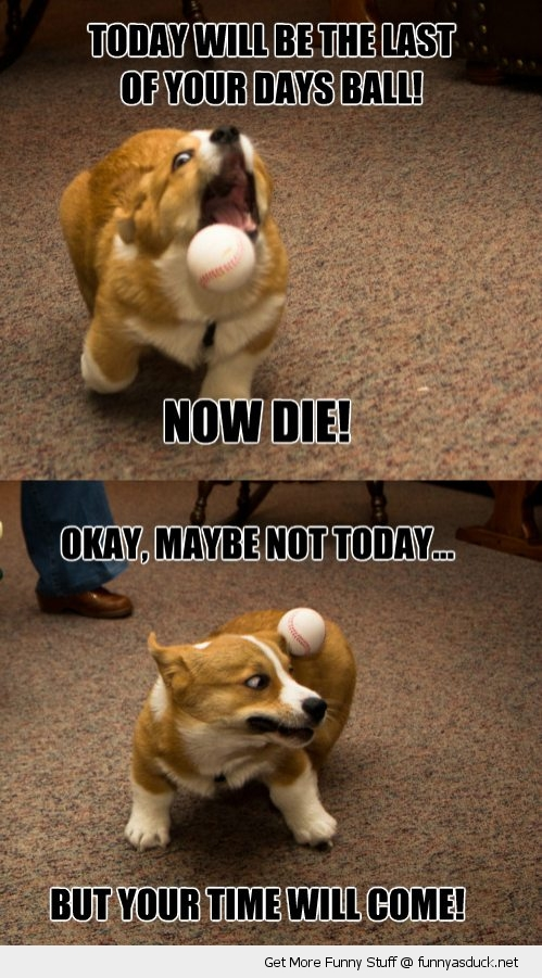 die ball dog animal catching not today cute funny pics pictures pic picture image photo images photos lol