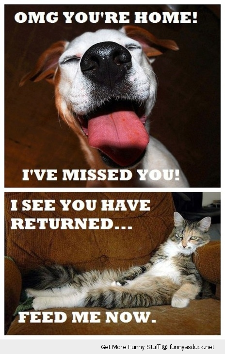 difference cats dogs vs missed you feed me animal home returned funny pics pictures pic picture image photo images photos lol