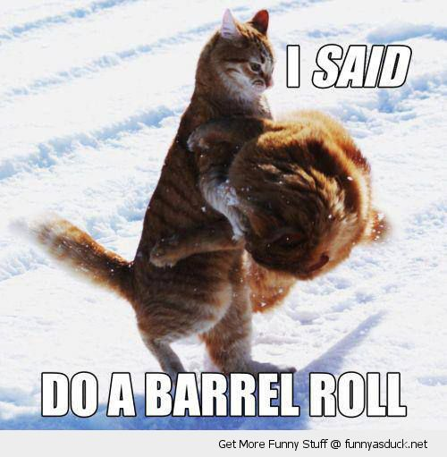 i said do a barrel roll cats animals lolcats fighting snow funny pics pictures pic picture image photo images photos lol