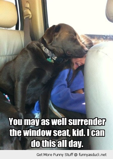 dog animal leaning lying kid car window seat surrender do this all day funny pics pictures pic picture image photo images photos lol