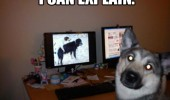 can explain dog animal busted caught watching porn funny pics pictures pic picture image photo images photos lol