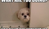 what doing dog animal door bathroom pee without me funny pics pictures pic picture image photo images photos lol