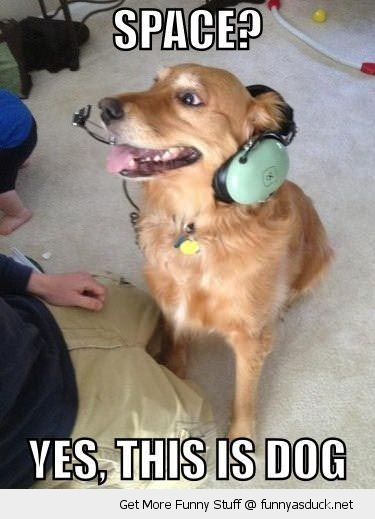 space dog animal headset nasa headphones astronaut funny pics pictures pic picture image photo images photos lol