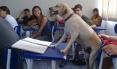 no idea doing dog animal class desk school funny pics pictures pic picture image photo images photos lol