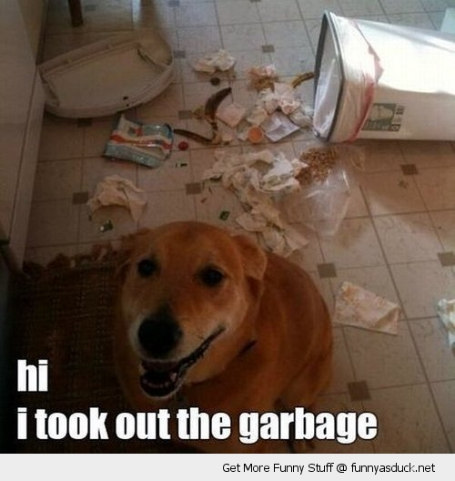 dog animal mess kitchen bin garbage trash funny pics pictures pic picture image photo images photos lol