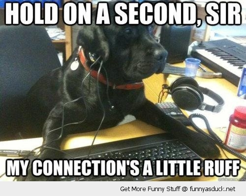 hold on second dog on phone ruff connection animal funny pics pictures pic picture image photo images photos lol
