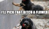 cute dog picking get that bitch love flowers animal sweet funny pics pictures pic picture image photo images photos lol