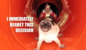 dog pug animal slide chute regret scared funny pics pictures pic picture image photo images photos lol