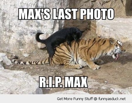 maxs last photo rip dog sex humping tiger animal zoo funny pics pictures pic picture image photo images photos lol