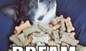 living the dream dog animal sleeping covered biscuits treats funny pics pictures pic picture image photo images photos lol