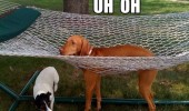 uh oh dog animal legs stuck hammock tree garden funny pics pictures pic picture image photo images photos lol