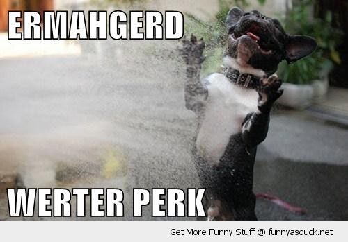 ermahgerd weter perk water park happy dog animal splash funny pics pictures pic picture image photo images photos lol