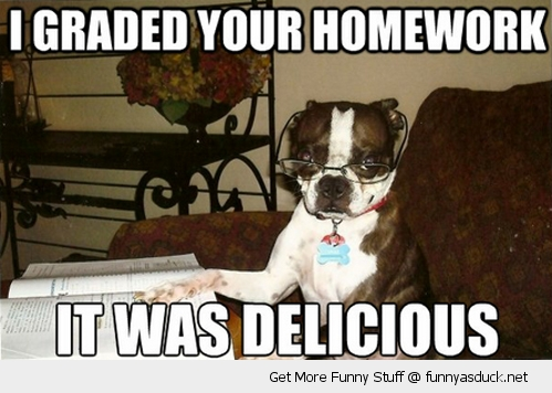 graded home work delicious dog animal glasses reading book funny pics pictures pic picture image photo images photos lol