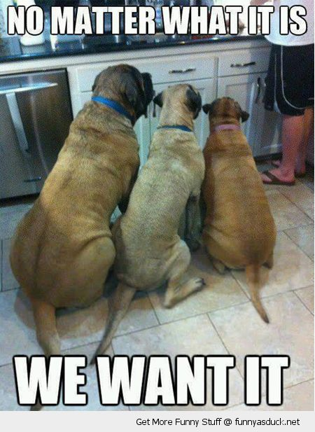 dogs animals sitting kitchen floor food we want it funny pics pictures pic picture image photo images photos lol
